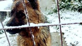 Hond het Ontschorsen in de Sneeuw stock videobeelden