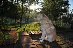 Hond het ontspannen stock foto's