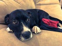 Hond het ontspannen in huis met pantoffel Royalty-vrije Stock Foto