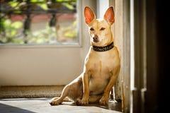 Hond het ontspannen onder de zon thuis Stock Foto