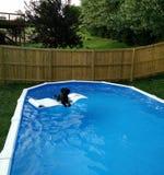 Hond het Ontspannen in Pool Stock Foto's