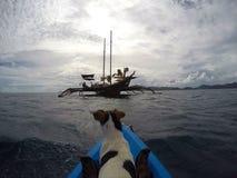 Hond in het overzees Stock Foto