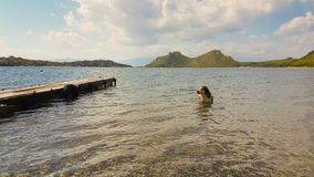 Hond in het overzees die een bad hebben Een grappig en leuk ogenblik stock videobeelden
