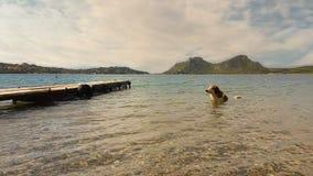 Hond in het overzees die een bad hebben Een leuk ogenblik stock footage