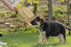 Hond in het park Stock Fotografie