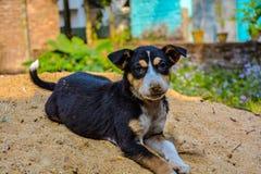 Hond in het park royalty-vrije stock afbeelding