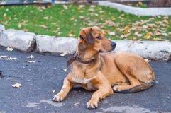 Hond in het park Stock Foto's