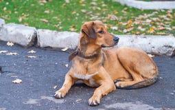 Hond in het park Stock Afbeeldingen