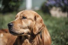 Hond het richten Royalty-vrije Stock Afbeeldingen