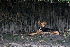 Hond het rusten Royalty-vrije Stock Afbeelding