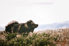 Hond het schudden Royalty-vrije Stock Foto's