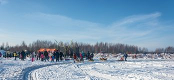 Hond het sledding bij de pret van de festivalwinter in Uglich, 10 02 2018 binnen Stock Foto