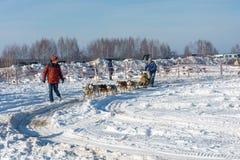 Hond het sledding bij de pret van de festivalwinter in Uglich, 10 02 2018 binnen Royalty-vrije Stock Foto's