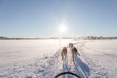 Hond het sledding in Lapland Stock Foto's