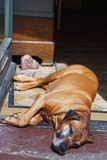 Hond het sluimeren in stadscentrum van Baden Baden Germany Stock Afbeelding