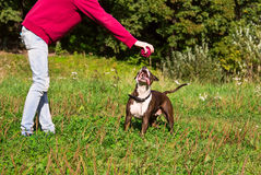 Hond het spelen bal met zijn meester Stock Foto's