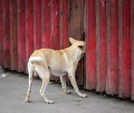 Hond het spelen bij de krottenwijk in Manilla, Filippijnen stock fotografie
