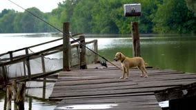 Hond het spelen met vogels stock footage