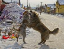Hond het spelen op de de winterweg stock foto's