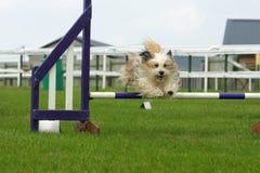 Hond het springen Royalty-vrije Stock Fotografie