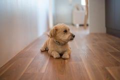 Hond het stellen Royalty-vrije Stock Foto's