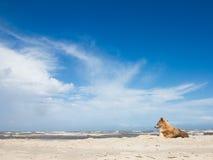 Hond in het strand Stock Afbeelding