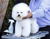 Hond het Verzorgen Stock Foto's
