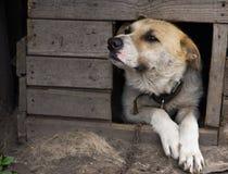 Hond in hondehok royalty-vrije stock fotografie