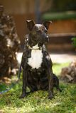 Hond, Hondendermatitis, Verdwaalde honden Royalty-vrije Stock Fotografie