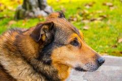 Hond hoofdprofiel royalty-vrije stock foto's