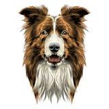 Hond hoofdras border collie stock illustratie