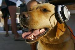 Hond in hoofdtelefoons Stock Afbeeldingen