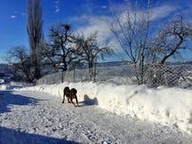 Hond in ijs Royalty-vrije Stock Foto's