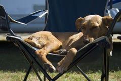 Hond in kamperen-stoel stock foto