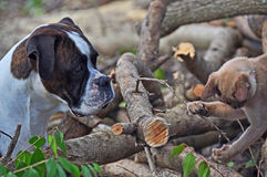 Hond & kat die van het huisdier samen de de in openlucht spelen royalty-vrije stock afbeelding