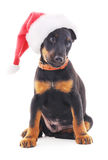 Hond in Kerstmishoed Stock Foto's