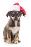 Hond in Kerstmishoed Stock Afbeeldingen