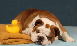 Hond klaar om een bad te nemen royalty-vrije stock fotografie