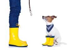 Hond klaar voor een gang in regen Stock Fotografie