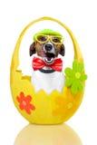 Hond in kleurrijk paasei Stock Afbeelding