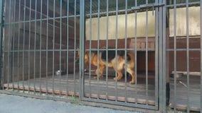 Hond in Kooi stock footage