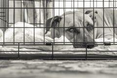 Hond in Kooi Royalty-vrije Stock Foto