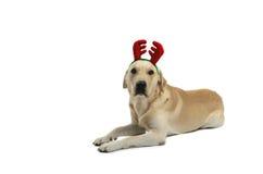 Hond in kostuum royalty-vrije stock fotografie