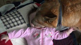 Hond Kussende Baby bovenmatig - Overheadkosten stock footage
