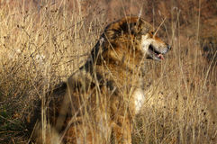 Hond in lang gras Royalty-vrije Stock Afbeelding