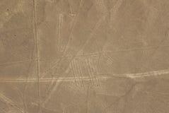 Hond, lijnen Nazca stock fotografie