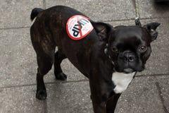Hond met Antiukip-sticker Stock Afbeeldingen