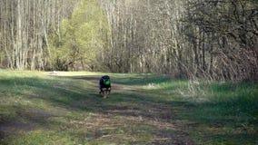 Hond met bal in werking die wordt gesteld die stock videobeelden