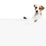 Hond met banner stock afbeelding