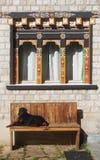 Hond met Bhutan venster stock afbeelding